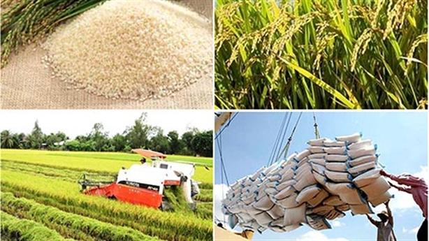 Không xuất nổi gạo vì dư lượng thuốc bảo vệ thực vật