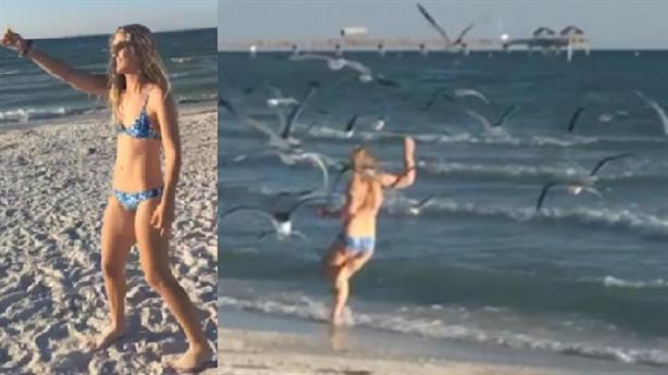 Cả đàn mòng biển lao vào tranh đoạt thiếu nữ mặc bikini