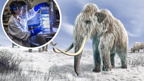 Hồi sinh voi ma mút tuyệt chủng trong 2 năm tới