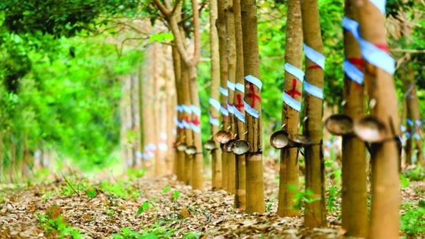 Cổ phần hóa Tập đoàn Cao su: Khó định giá vì đất