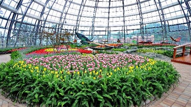 """Khám phá Lễ hội Hoa mùa xuân """"đẹp như ở nước ngoài"""""""