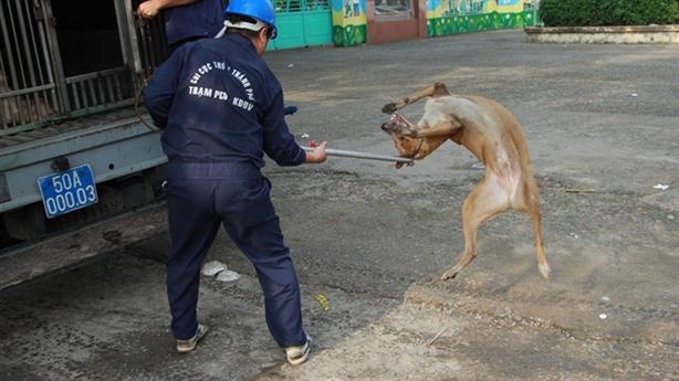 Đội bắt chó thả rông: 'Năm Mậu Tuất mong có thêm việc'