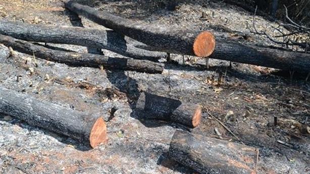 Phá rừng cạnh trạm quản lý bảo vệ: Có sự bao che?