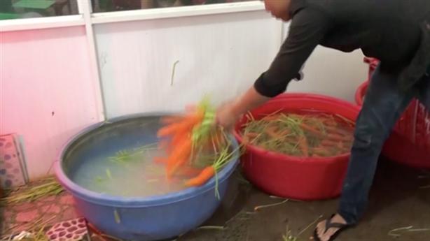 Dùng hóa chất để tẩy sạch 6 tấn củ cải, cà rốt
