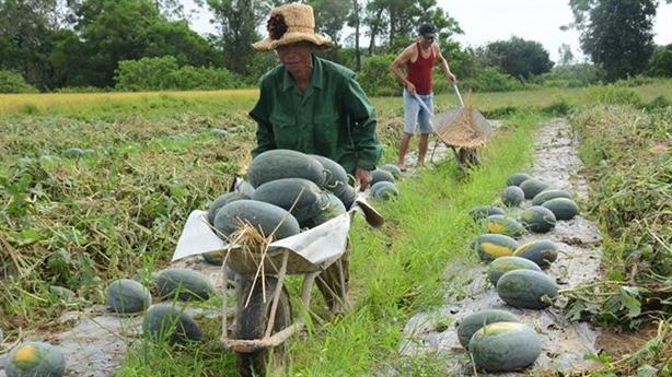Nông sản Việt là cô gái đẹp, lời an ủi ngọt tai