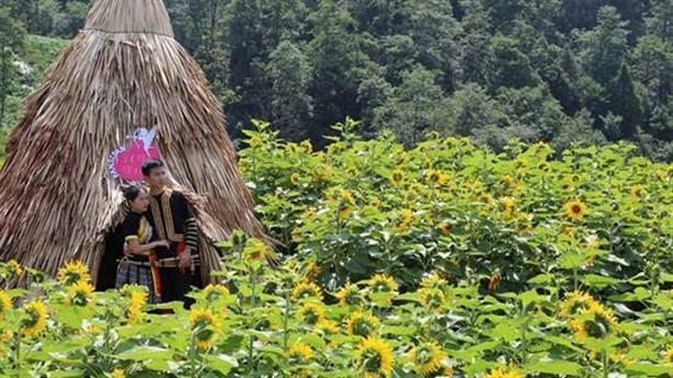 """Check-in đồi""""hoa mặt trời""""đẹp hơn trong phim ở chân núi Fansipan"""