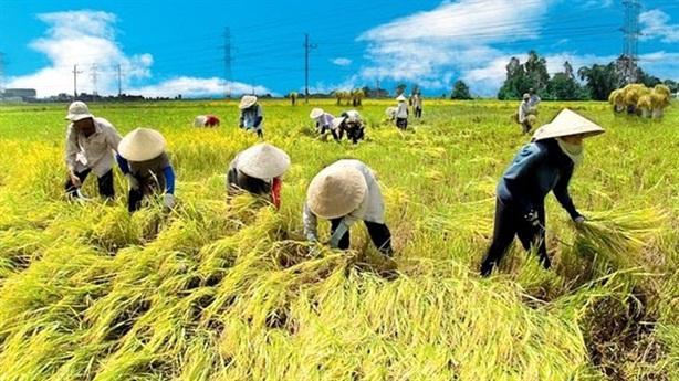 Xuất khẩu nông dân Việt sang Hàn kiếm 25 triệu/tháng