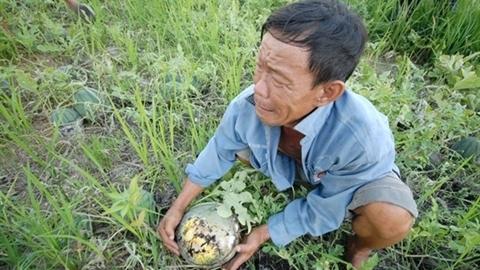 Tương lai nông sản Việt: Bộ KH&ĐT thêm lời buồn