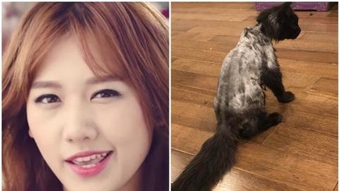 Trấn Thành trách oan Hari Won vụ cạo lông mèo?
