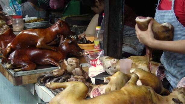Khuyên dân bỏ thịt chó: Giới trẻ dắt chó vào ăn cầy