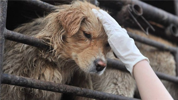 Cấm ăn thịt chó, mèo và giá trị Mỹ