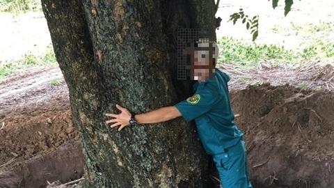 Bất ngờ người ôm cây gỗ quý giáng hương biến mất