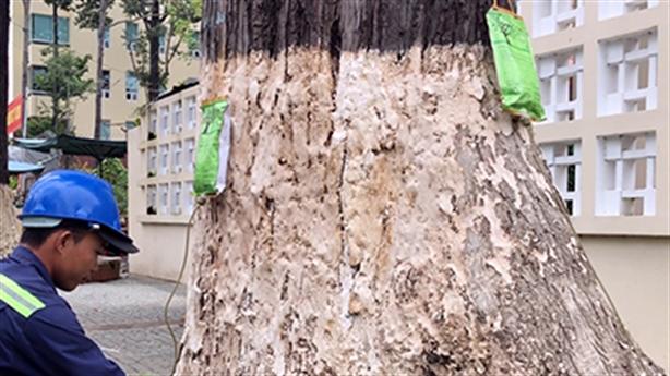 Vụ truyền dịch cứu 1.000 cây cổ thụ: '90% hàng Trung Quốc'