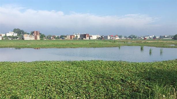 Cò đất ăn theo chủ trương chuyển đổi đất nông nghiệp
