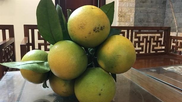 Người Hà Nội cẩn trọng kẻo ăn cam Cao Phong