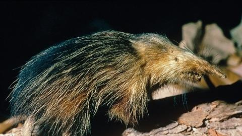 Những loài động vật xấu nhất hành tinh có thể tuyệt chủng