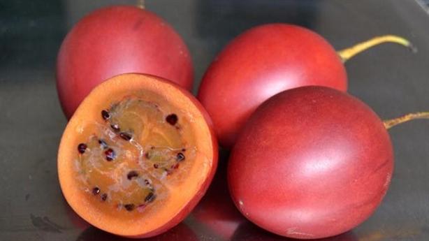 Giấc mơ cà chua thân gỗ 1 triệu đồng/kg tan tành