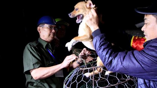 Đội bắt chó thả rông ở Hà Nội: Phải học kinh nghiệm...