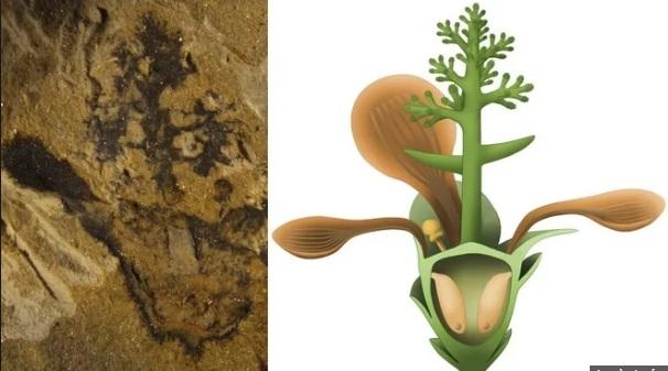Phát hiện loài hoa đầu tiên trên Trái đất