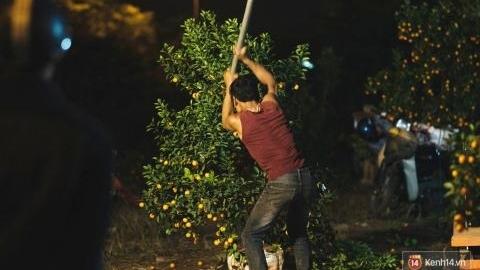 Chặt quất vì giá rẻ: Chủ vườn yêu cây như con