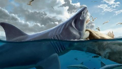 Phát hiện mới về kẻ khiến 'quái vật' Megalodon tuyệt chủng