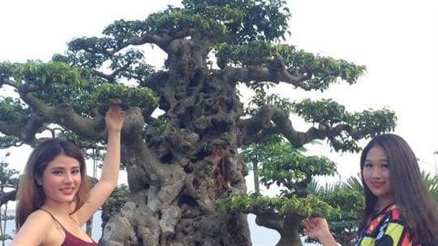 Bán cây sanh Tiên lão giáng trần 16 tỷ đồng gây sốc