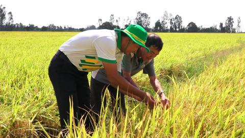 Phân bón Phú Mỹ-cùng nhà nông ứng phó thời tiết khắc nghiệt