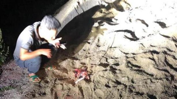Bé 7 tuổi bị đàn chó cắn tử vong: Chỉ đạo nóng