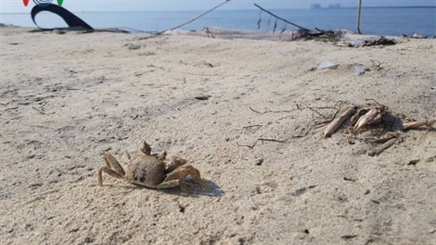 Xử lý cồn cát trên biển Cửa Đại: Tránh công dã tràng