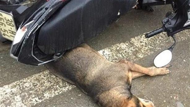 Chó nhà hung hăng cắn 5 người rồi tự lăn ra chết