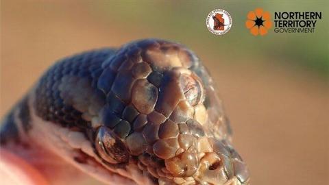 Phát hiện rắn ba mắt cực kỳ hiếm ngoài tự nhiên
