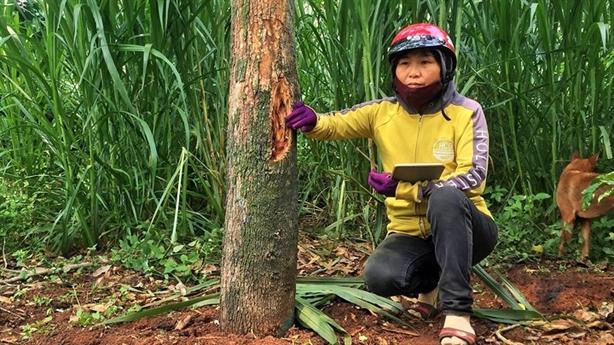 Vườn sầu riêng tiền tỷ bị phá hoại: Bất ngờ nghi vấn