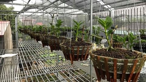 Chủ đau xót liệt kê vườn lan 2 tỷ bị 'khoắng sạch'