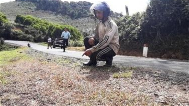 Diễn biến mới vụ phun thuốc diệt cỏ dọc quốc lộ