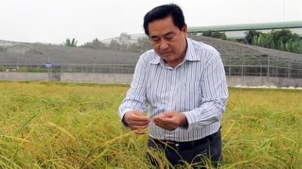 Xuất khẩu gạo vào Trung Quốc giảm 75%, doanh nghiệp lao đao