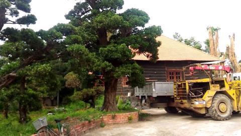 Bầu Kiên nhận trái đắng với cây tùng Nhật 2 triệu USD