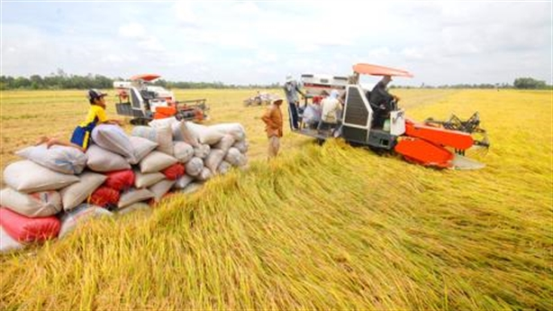 Gạo Việt gặp khó ở Trung Quốc: Tiên trách kỷ!