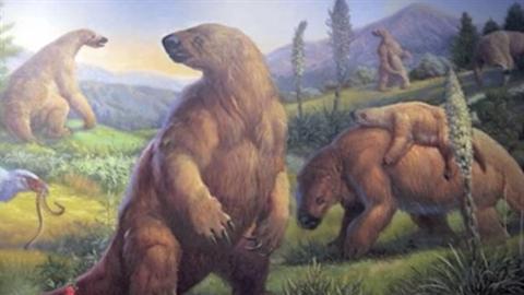Loài quái vật nghìn năm vẫn sống trong rừng rậm Amazon?