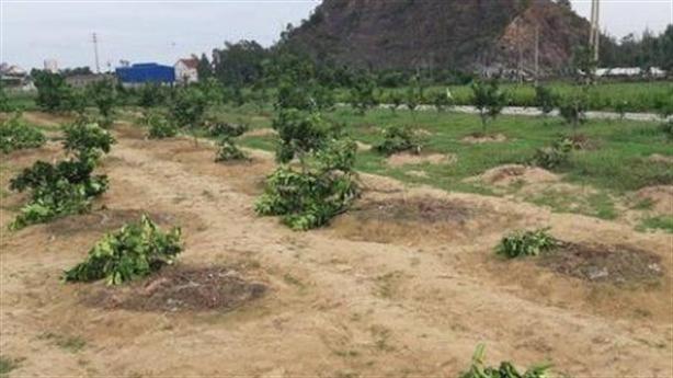 Nữ đội trưởng thuê người chặt tan vườn cây của chủ tịch