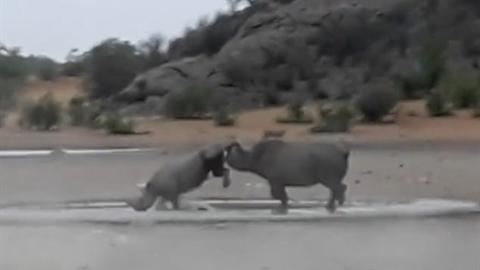 Tê giác mất sừng cho kẻ địch ăn đòn tơi tả