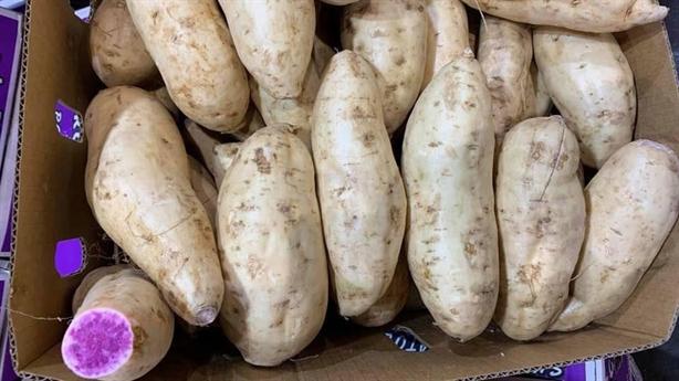 400.000 đồng/kg khoai lang vỏ trắng ruột tím: 'Người Úc mua ít'