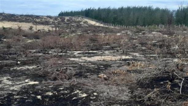 Dự án mọc lên, 140ha rừng dương biến mất: Điều khó hiểu