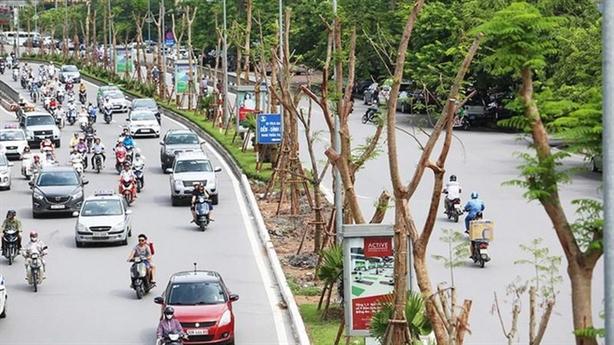 Hà Nội xin trồng 600.000 cây không đấu thầu: Chưa thuyết phục