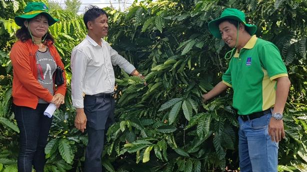 Cà phê Tây Nguyên mê phân bón Phú Mỹ