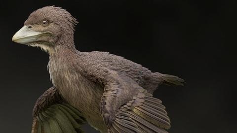 Phát hiện loài bồ câu ngoại hình xấu xí như quái vật