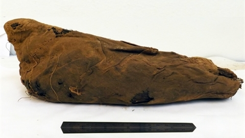 Bí ẩn hàng triệu xác ướp chim trong hầm mộ Ai Cập