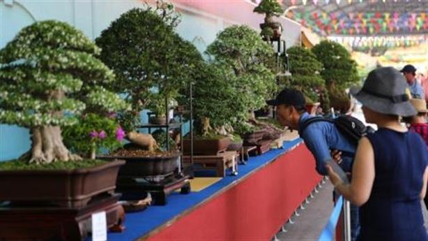 Bonsai 4-5 tỷ tại triển lãm Suối Tiên: Không xứng