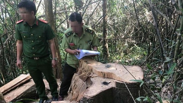 Một vụ phá rừng, ba cơ quan, ba số liệu: Giải thích