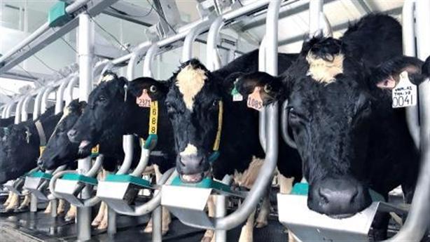 Vinamilk đảm bảo tự chủ nguồn nguyên liệu sữa