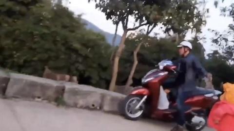 Người bắt khỉ con trên chùa Linh Ứng: 'Nuôi chơi...làm gì căng?'